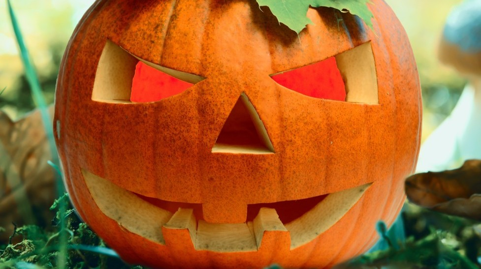 Halloween in Irland. Kürbis im Blätterwald © Kathleen Rekowski